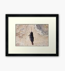 insect. Framed Print