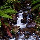 Cement Creek Cascades - Victoria Australia by Norman Repacholi