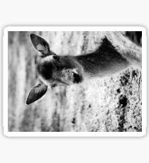 more monochome deer Sticker