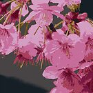 Beautiful Pink Sakura Cherry Blossoms Illustration by Beverly Claire Kaiya