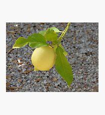 Single Ripe Lemon Photographic Print