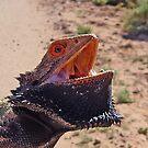 Australian Bearded Dragon by George Petrovsky