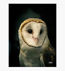 Oberon the Barn Owl Photographic Print