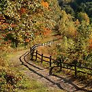 Broken Fence Rail on Quabbin Trail by SummerJade