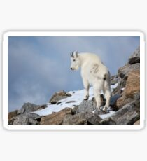 Mountain Goat in snow Sticker