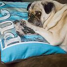 It's My Pug Pillow by Cee Neuner