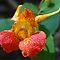 Orange Wildflowers of North America
