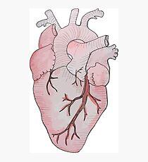 anatomical heart Photographic Print