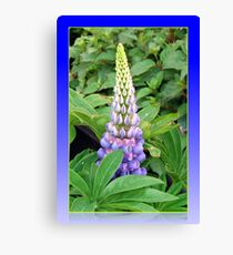 Lovely Lupin Canvas Print