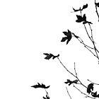 Autumn Monochrome by metriognome