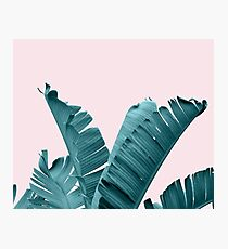 Abstract Blue Banana Leaves Photographic Print