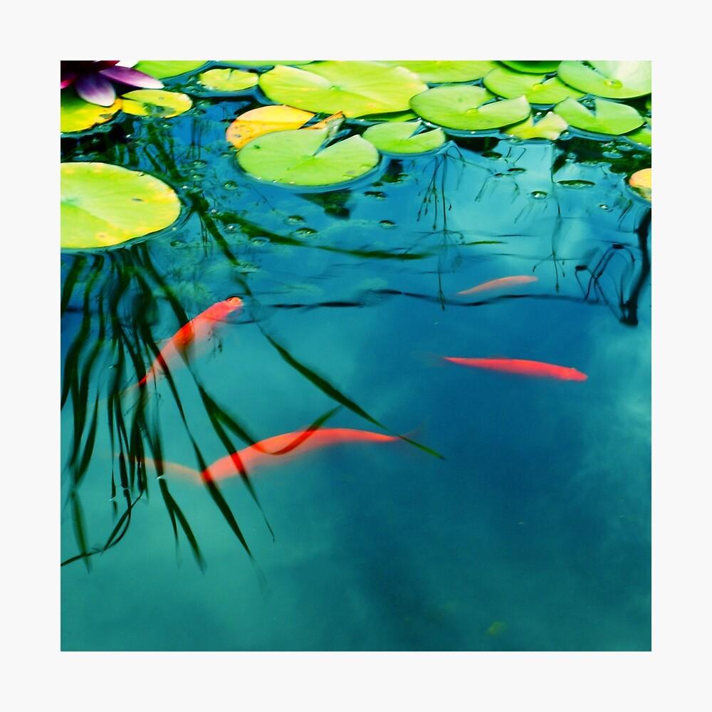 plaisir aquatique Photographic Print