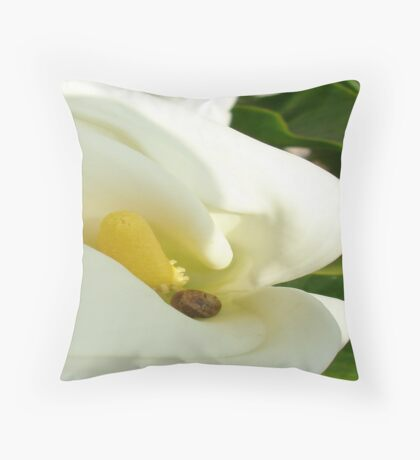 Beautiful Calla Flower On Green Natural Background  Throw Pillow