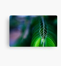 levels of branch Canvas Print
