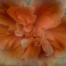 Shades of Orange by designingjudy