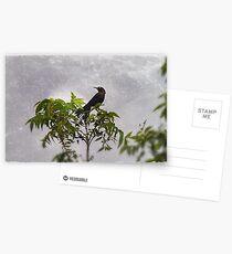 Bye, Bye, Blackbird Postcards