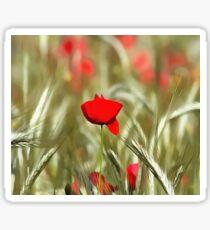 Hot Poppy Sticker