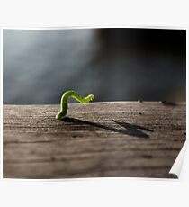 Inch worm Poster