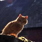 Ginger cat with dark background by turniptowers