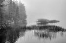 Still Pond by Bill Wetmore