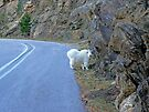 Goat's Track by Graeme  Hyde