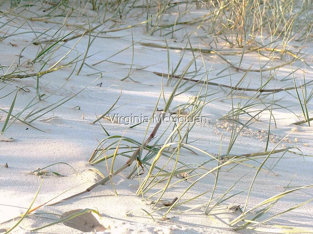 Afternoon Beach Shadows Fingal NSW by Virginia McGowan