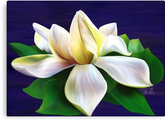 Gardenia by Laura Bell