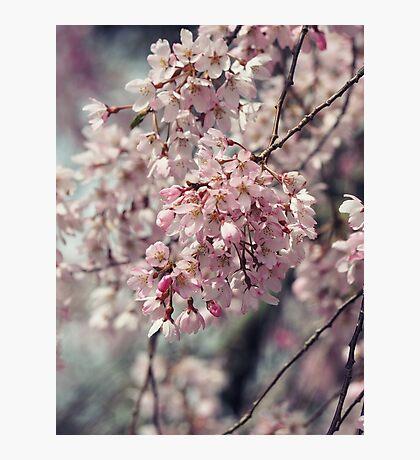 Serenade  Photographic Print