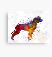 American Bulldog 01 in watercolor Canvas Print