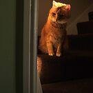 Waiting cat by turniptowers