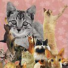 Feline Follies by kewzoo