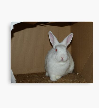 Bart in his box - aka Demon Bunny Canvas Print