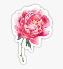Watercolor peony Sticker
