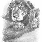 cozy spaniel dog drawing by Mike Theuer