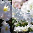White Petuna Collage by Lozzar Flowers & Art