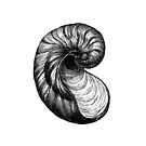 SHELL SEASHELL SHELLS VINTAGE ANTIQUE SCIENTIFIC ILLUSTRATION OCEAN BEACH by MyHandmadeSigns