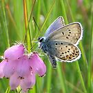 Heather and Blue by ienemien