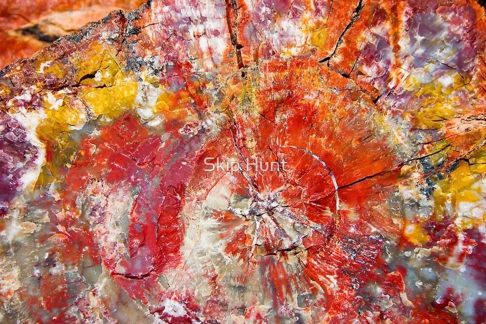 Painted Desert Wood 1 by Skip Hunt