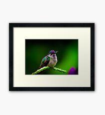Costa Rica wildlife  Framed Print
