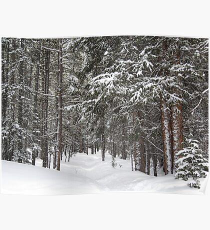 Woods in Winter Poster