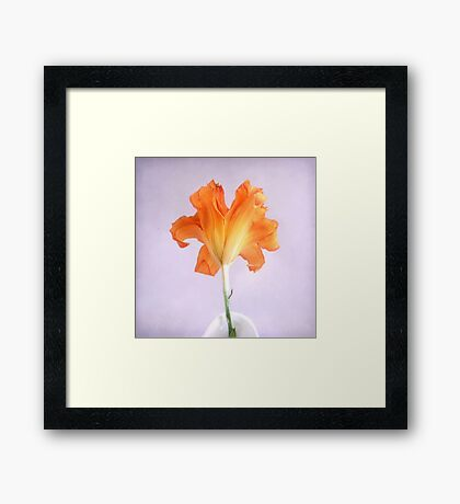Orange Daylily on a Light Purple Background Framed Print