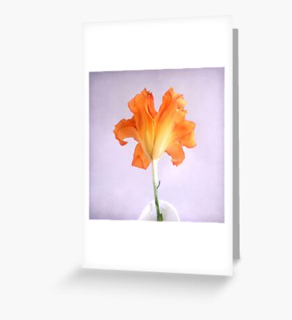 Orange Daylily on a Light Purple Background Greeting Card