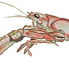 Crawfish Low Res by Statepallets