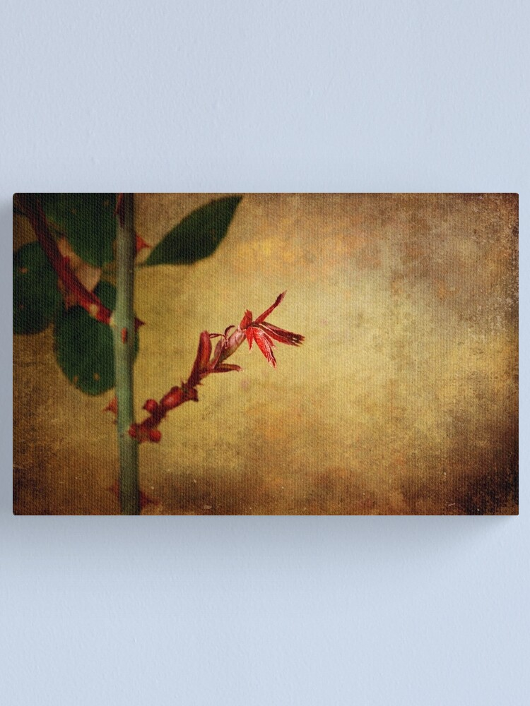 Alternate view of Becomes the Rose Canvas Print