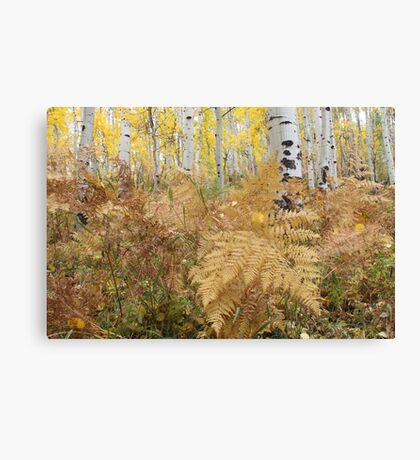 Ferns and Aspens Canvas Print