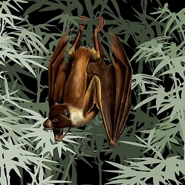 Flying Fox Bat in Bamboo Forest by historicnature