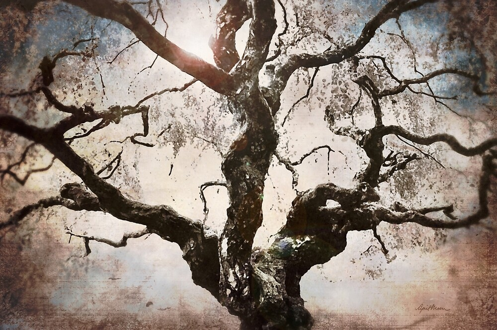 Twisted Tree I by April  Moen