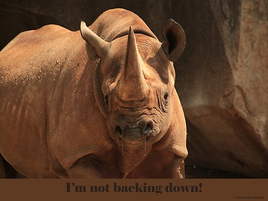 I'm not backing down! by Thomas Murphy