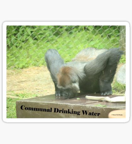 Communal Drinking Water Sticker