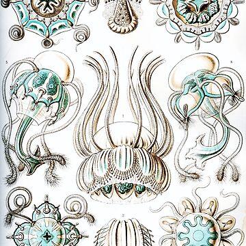 Haeckel Nature Narcomedusae Jellyfish by neonxiomai